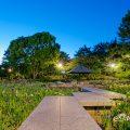 菖蒲池 北側 鶴舞公園 May 2020