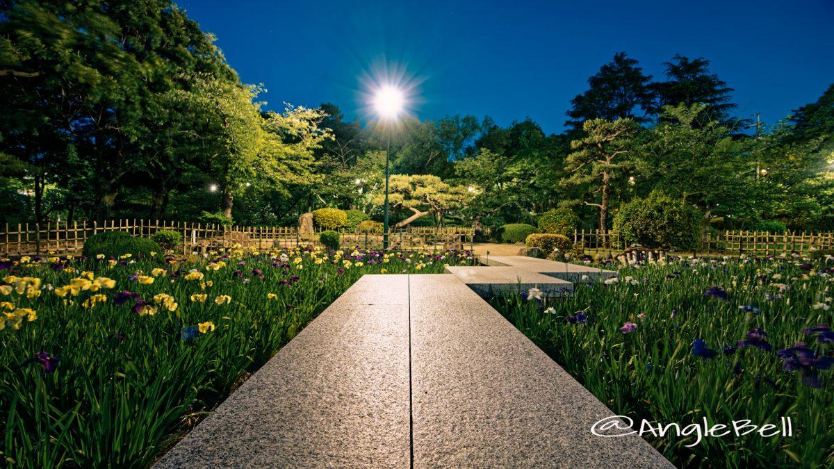 菖蒲池 (四阿) 南側 鶴舞公園 May 2020