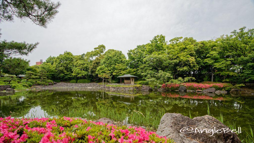 白鳥庭園 中の池 浮見四阿とサツキ June 2020