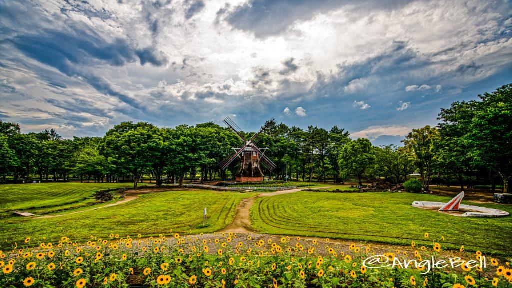 オランダ風車とヒマワリ (名城公園北園 花の山)