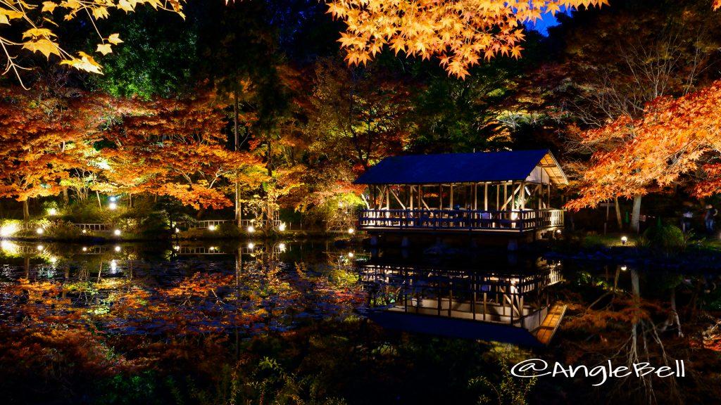 夕景 東山動植物園 奥池 もみじ狩り2017