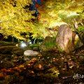 白鳥庭園 あかりアート 滝の景2017 観楓会