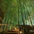 白鳥庭園 竹林「モウソウチク」のライトアップ 2017