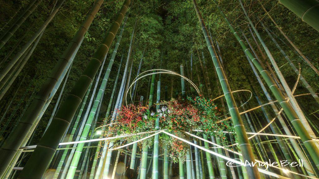 ライトアップ 白鳥庭園 竹林 華と灯りの路地飾り2017
