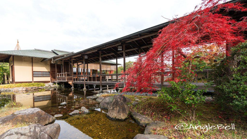 白鳥庭園 茶室 清羽亭 渡り廊下 autumn 2017