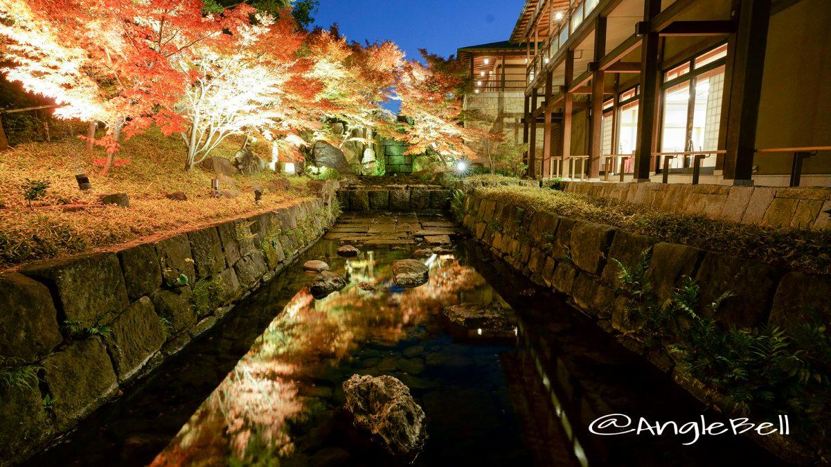 紅葉 名古屋徳川園 龍門の瀧  ライトアップ2017