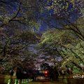 夜桜 名古屋城 正門前の桜 March 2018