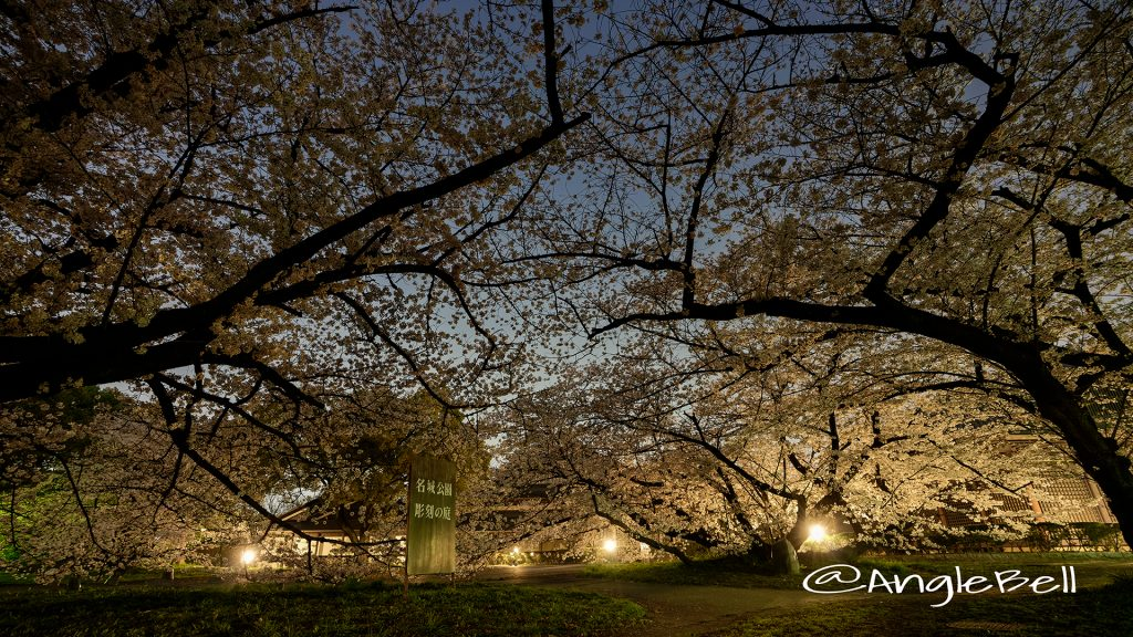 夜桜 名城公園 彫刻の庭 March 2018