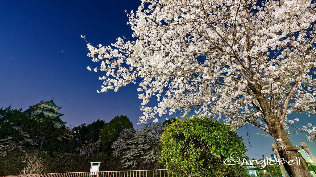 夜景 名城公園北園 藤の回廊広場から見る 桜と名古屋城 March 2018