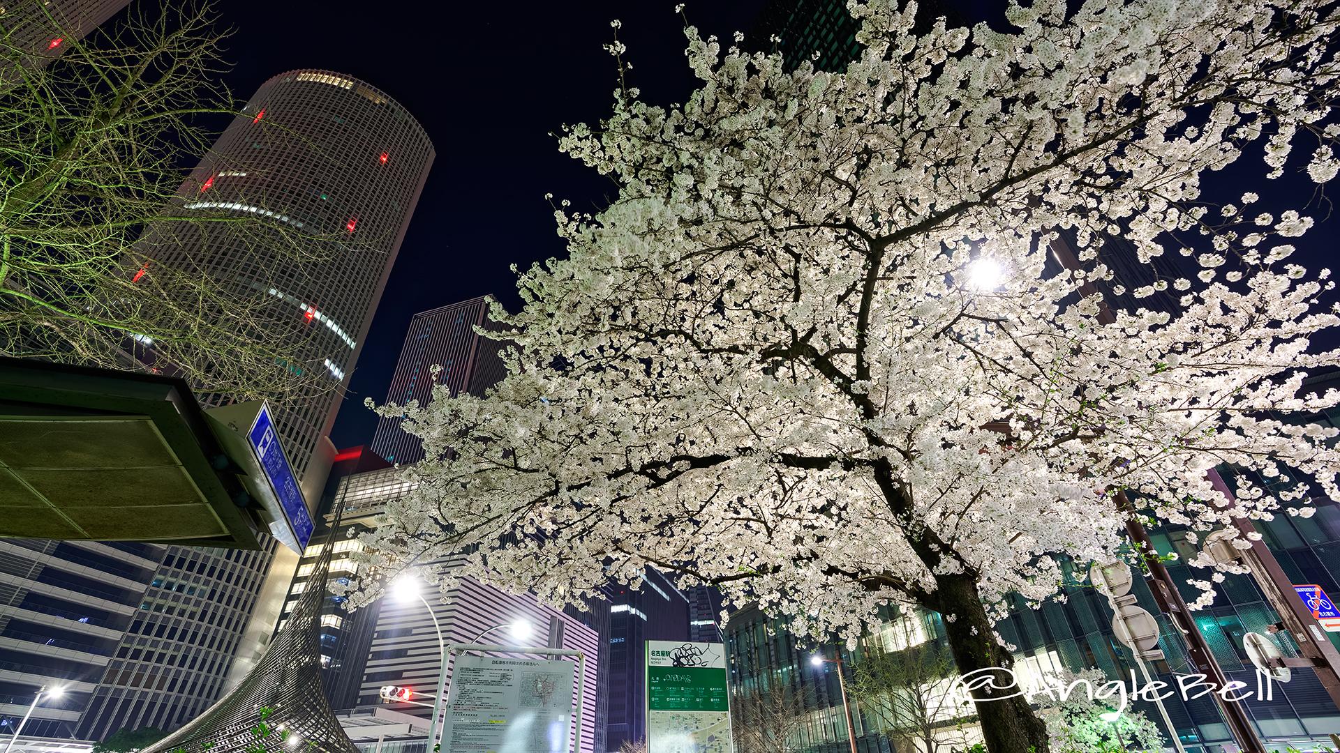 夜景 名古屋駅 桜通 桜と飛翔 March 2018