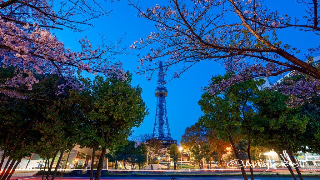 夜明け前 桜通から見た名古屋テレビ塔 March 2018