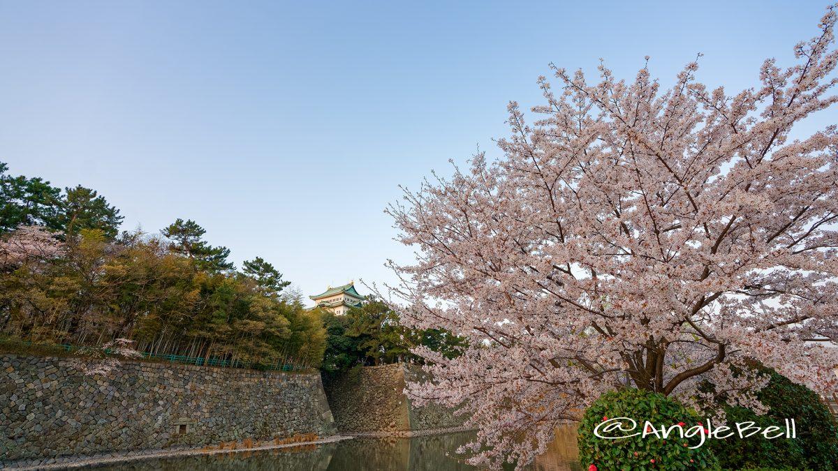 名城公園 外堀の桜と名古屋城  March 2018