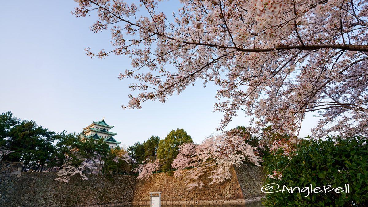 名城公園北園 藤の回廊広場から見る 桜と名古屋城 March 2018