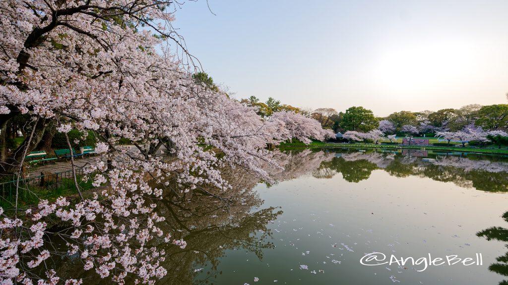 早朝 御深井西橋から見る御深井池(おふけ池) March 2018