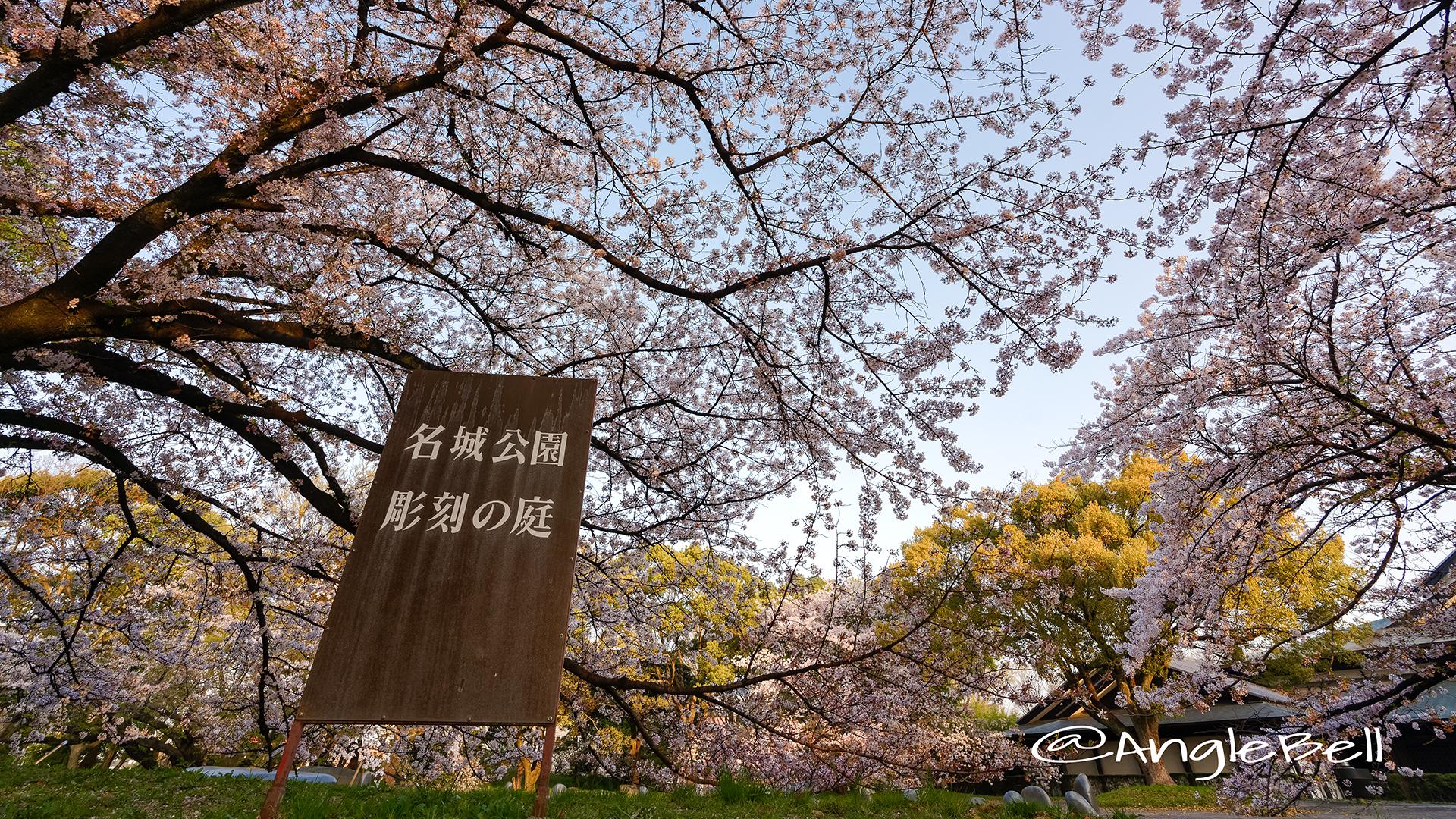 早朝 名城公園 彫刻の庭 March 2018