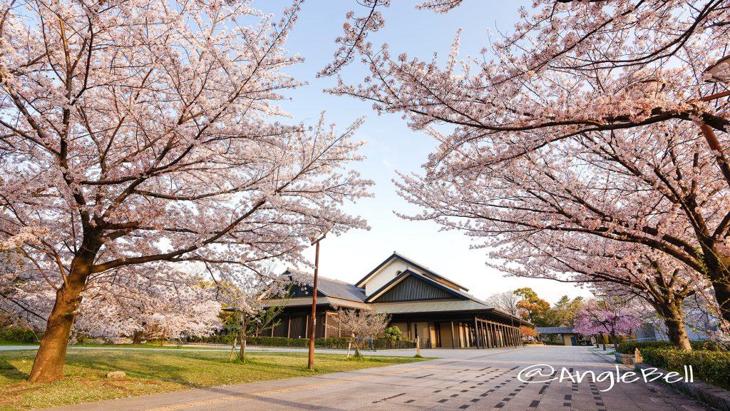 早朝 名古屋能楽堂と桜風景 March 2018