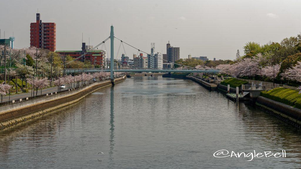 熱田区 旗屋橋から見た堀川沿いの桜と熱田記念橋 April 2018
