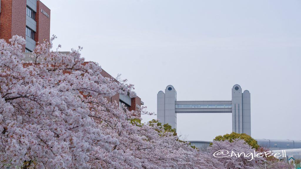 白鳥公園 桜と名古屋国際会議場 April 2018
