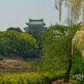 名古屋城と藤の回廊 名城公園 April 2018