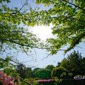 新緑の候 名城公園 おふけ池 2018
