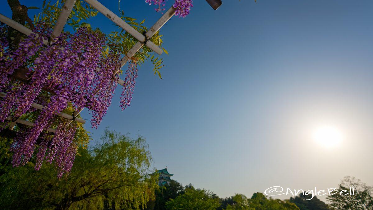 名城公園北園 藤の回廊広場  April 2018