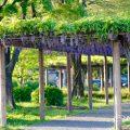 名城公園 藤の回廊広場 April 2018