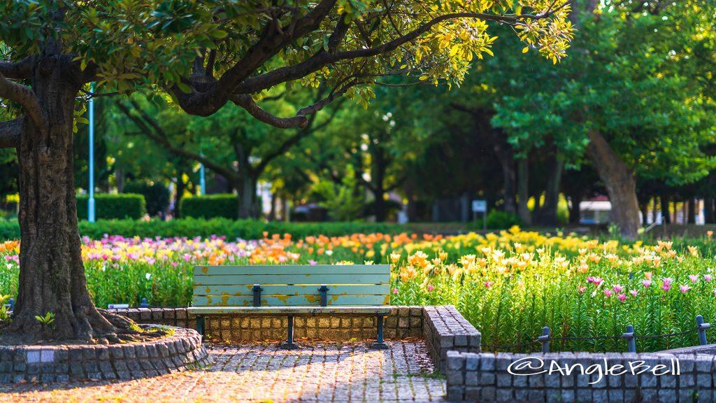夕景 千種公園 ベンチと百合 2018
