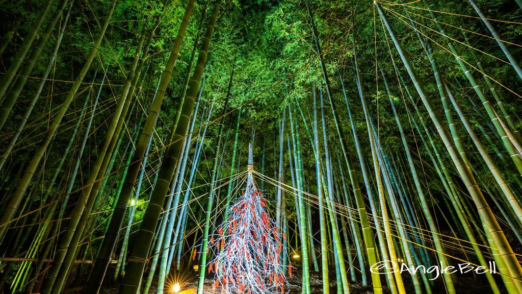 白鳥庭園 紅葉ライトアップ 竹林 2018