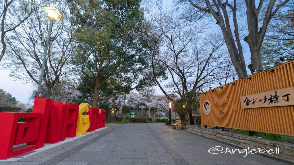 早朝 金シャチ横丁 宗春ゾーンと桜2019