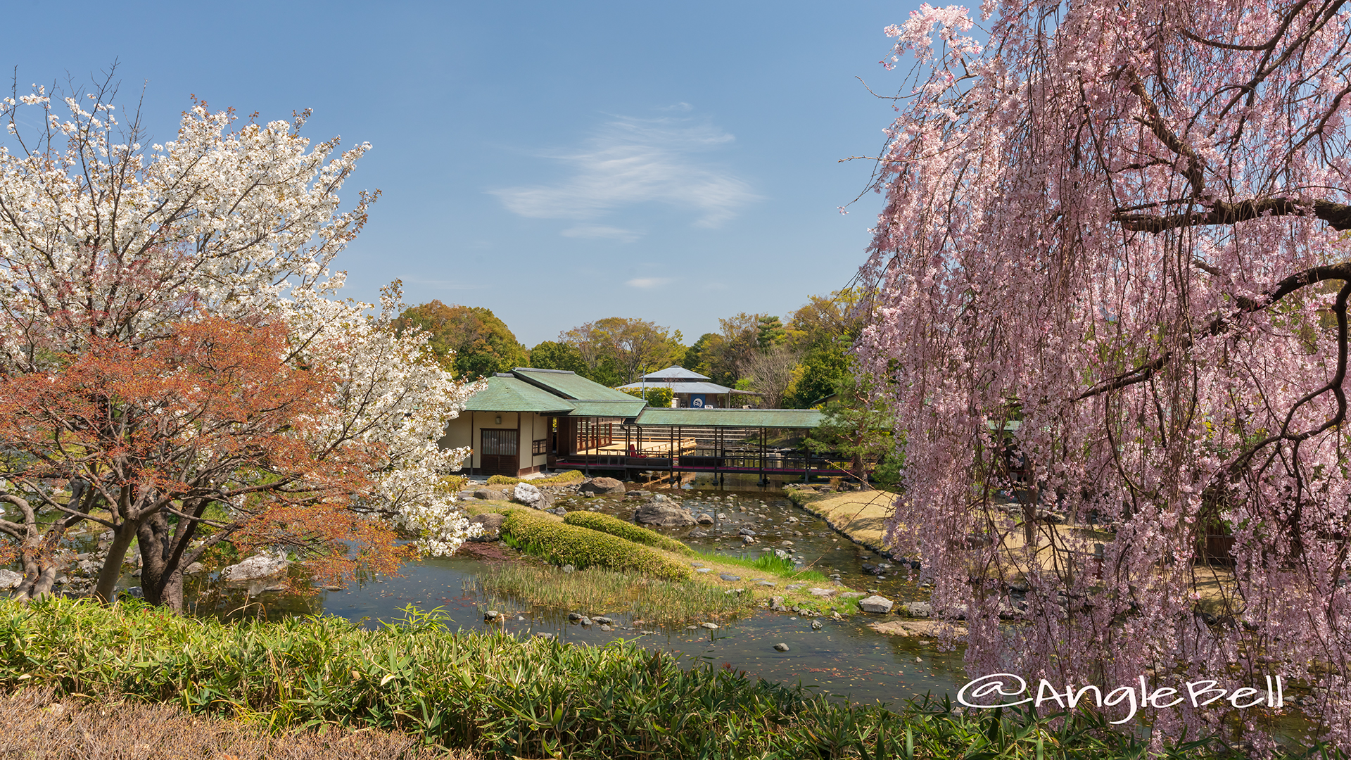 白鳥庭園 茶室 清羽亭 桜風景 2019