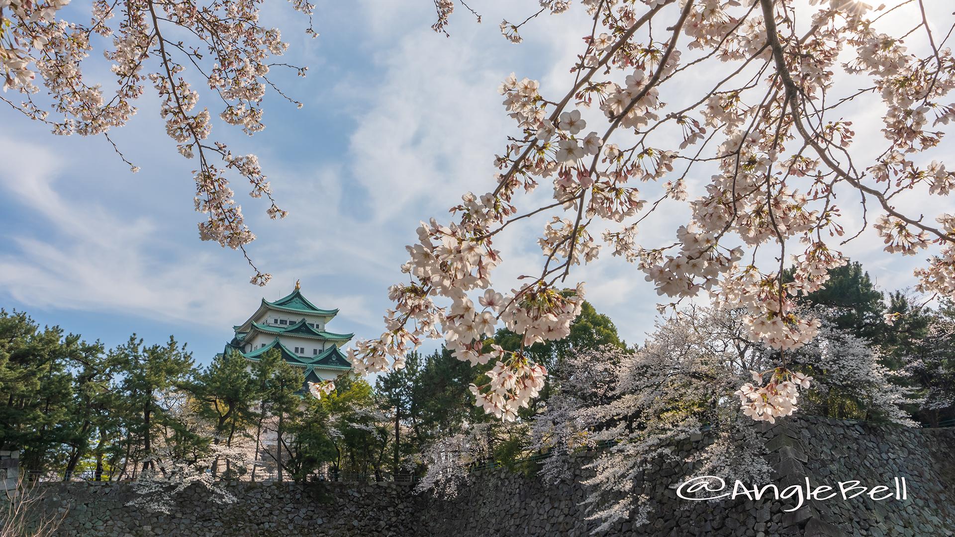 名城公園北園 藤の回廊広場 桜と名古屋城 2019