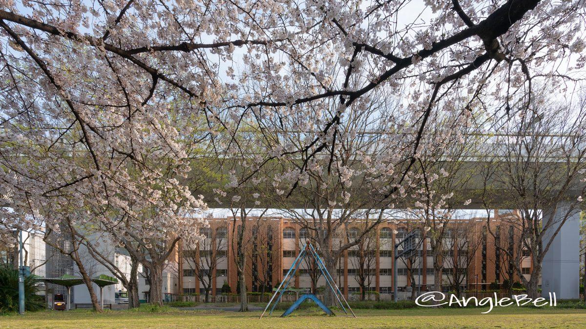 夕景 名城公園 ライオンヘルスパーク ベンチから見た桜と外堀通 2019