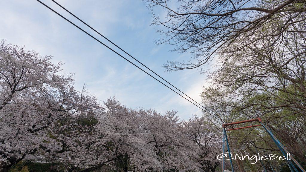名城公園 ライオンヘルスパーク ターザンロープと桜