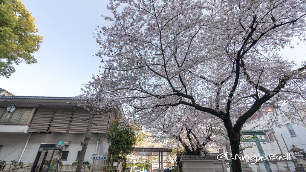 中区丸の内 東照宮会館 桜