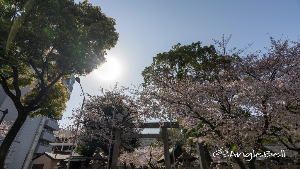 那古野神社 桜