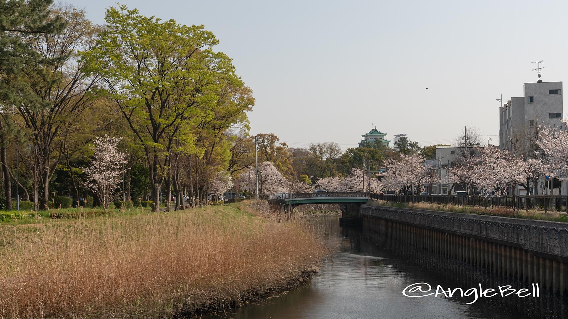 名古屋城 中土戸橋 堀川と桜風景