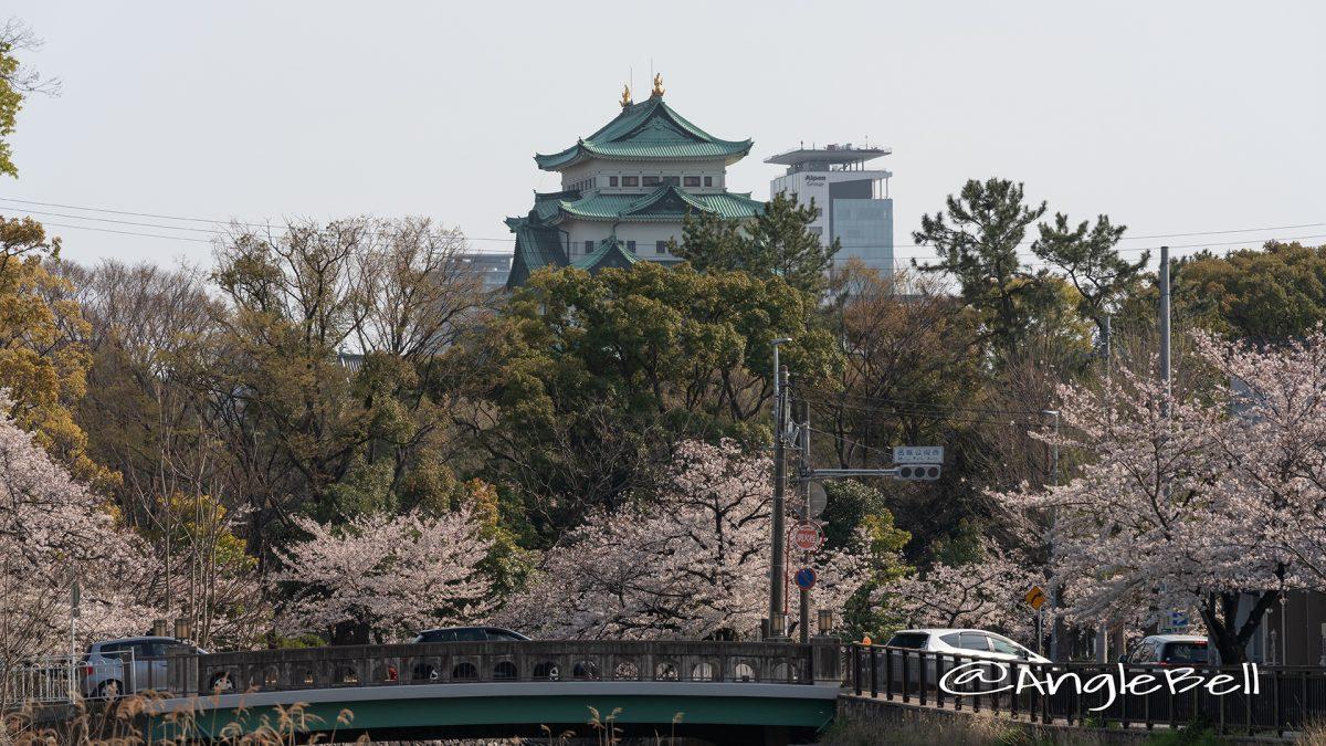 名古屋城 中土戸橋 桜風景 2019