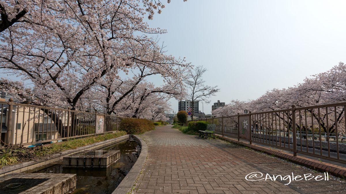 千種区 猪々道公園前の桜