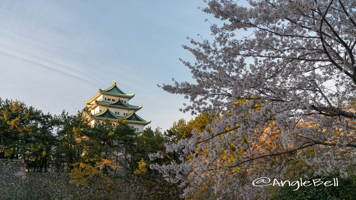 名城公園 外堀から見る名古屋城とサクラ 2019