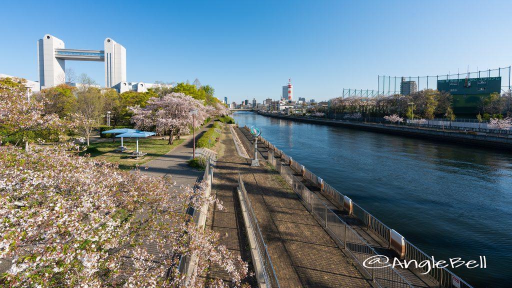 白鳥公園 桜並木と名古屋国際会議場 2019