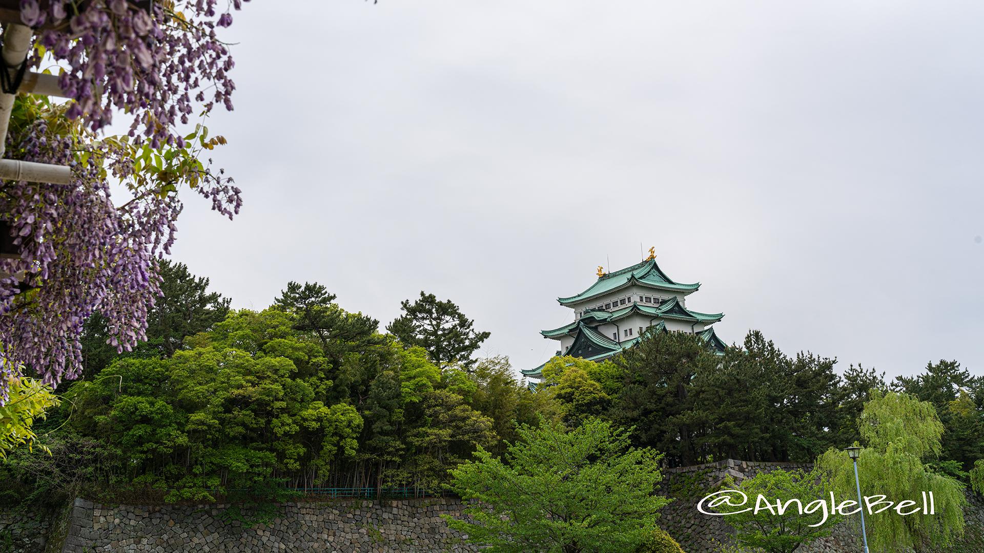 名城公園 藤の回廊広場からみる名古屋城