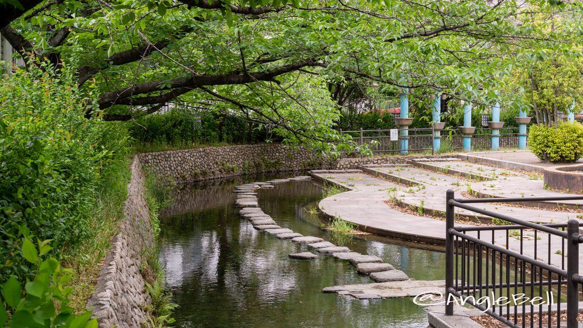 八田 水の広場 飛び石