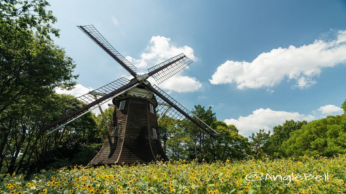 名城公園 ヒマワリとオランダ風車2019