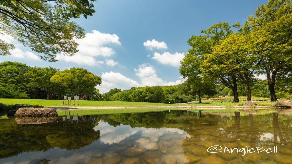名城公園 芝生広場 真夏の風景